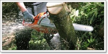 LM Trees Commercial And Domestic Tree Surgeons, Leamington Spa and Warwickshire